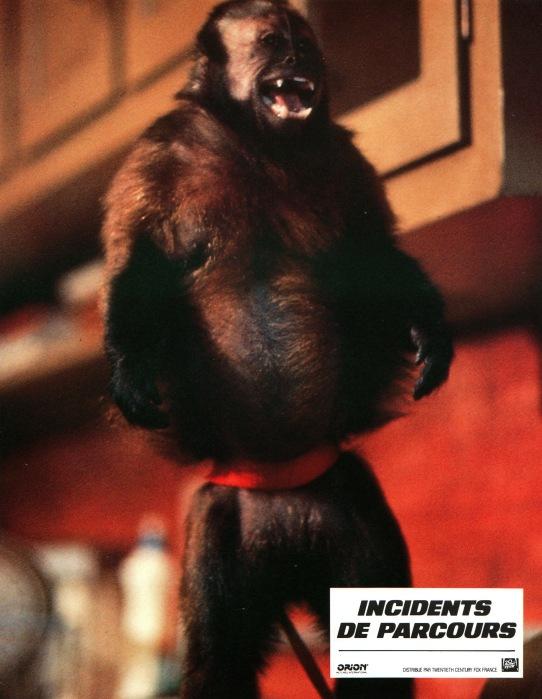 monkeyshines-france-8