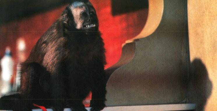 monkeyshines_07